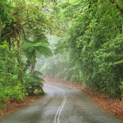 Daintree-Rainforest-road-768x510