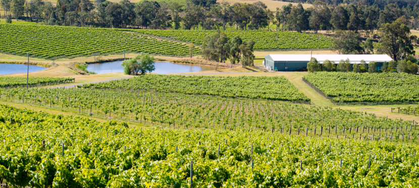 Tasting the Best Wines in Australia
